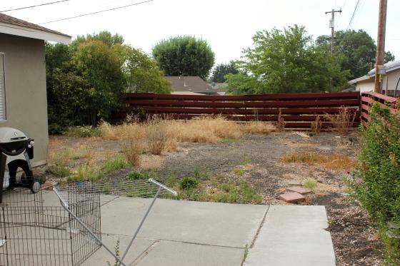 Backyard August 9 2014